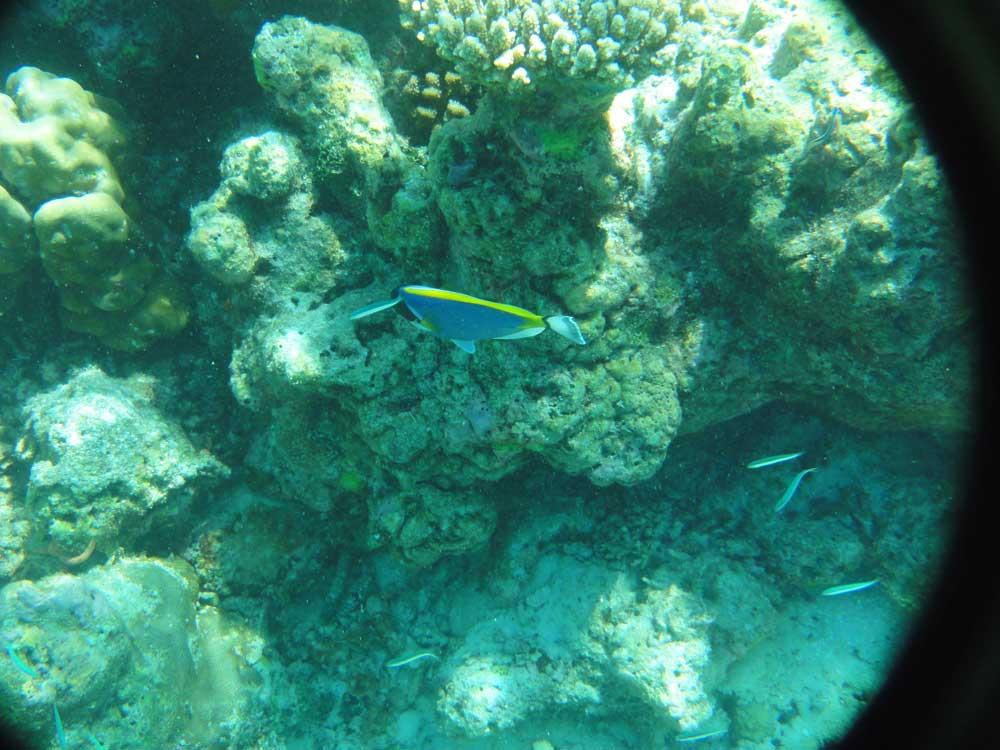 viaggio di nozze maldive: snorkeling
