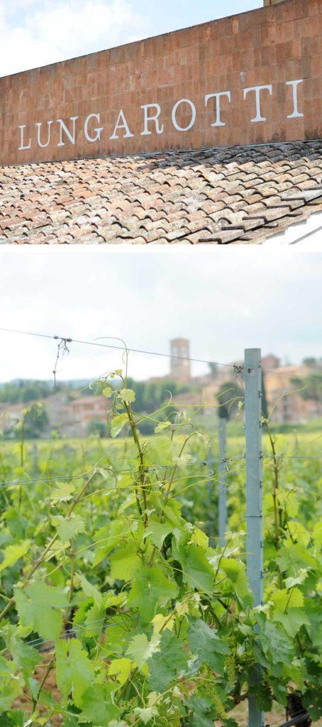 Matrimonio country tema vino: Cantine Lungarotti a Perugia