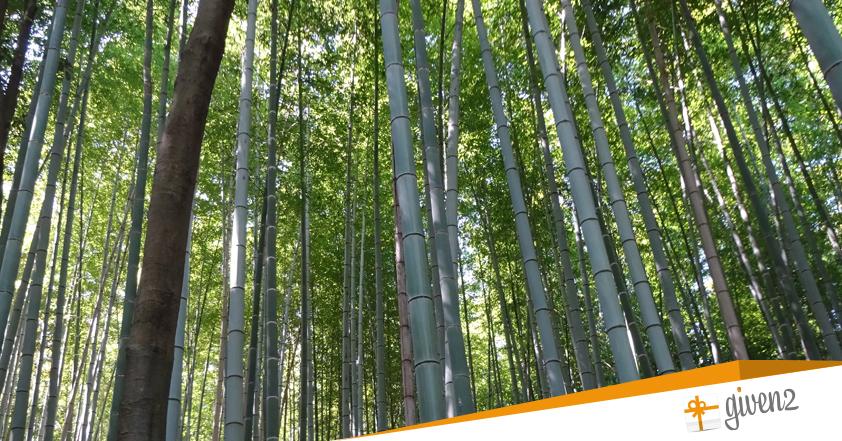 Cosa vedere in Giappone: Kyoto - Arashiyama bamboo grove