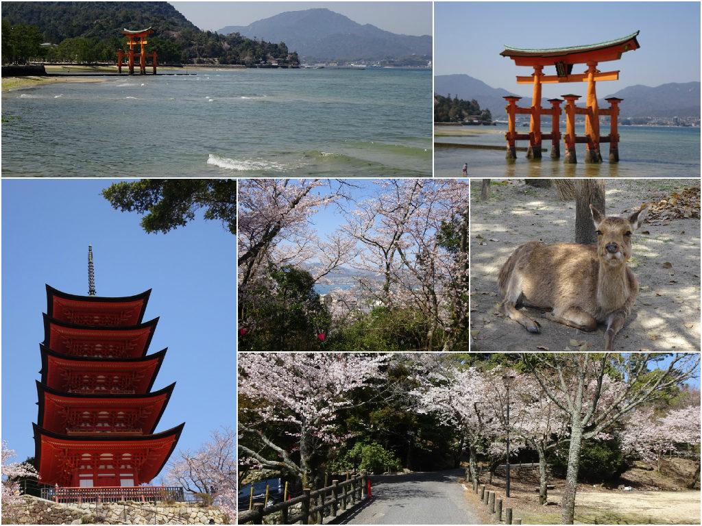 Japan Honeymoon Miyajima