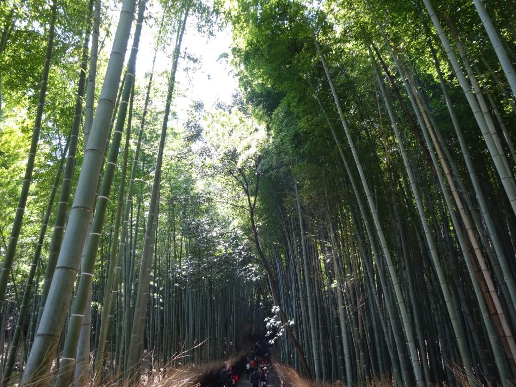 japan honeymoon arashiyama bamboo grove