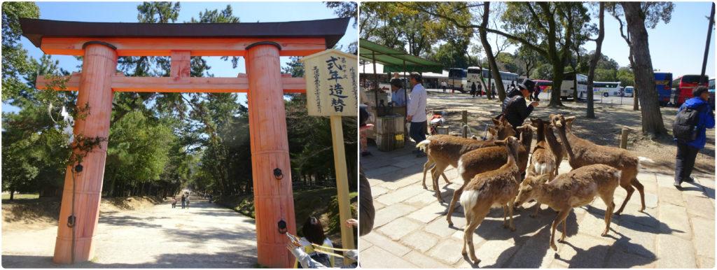 japan honeymoon Nara-koen