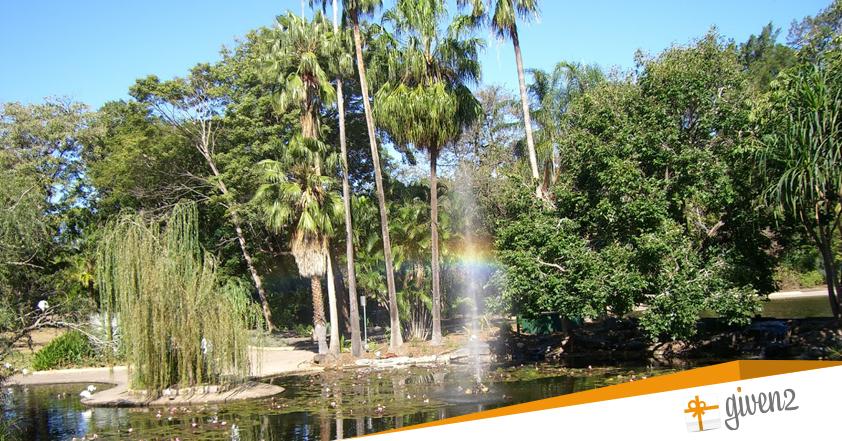 Viaggio di nozze in Australia: foresta Pluviale