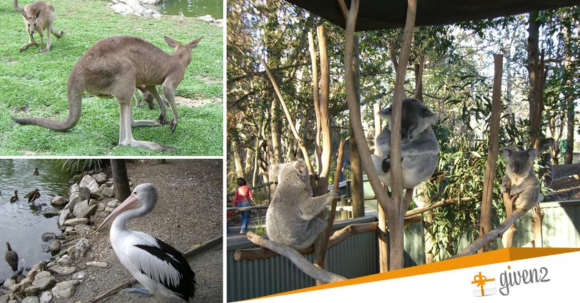 Viaggio di nozze in Australia tra canguri e koala