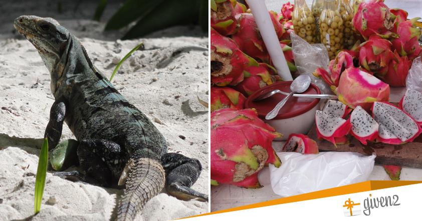 Cosa vedere in Messico: Flora e Fauna