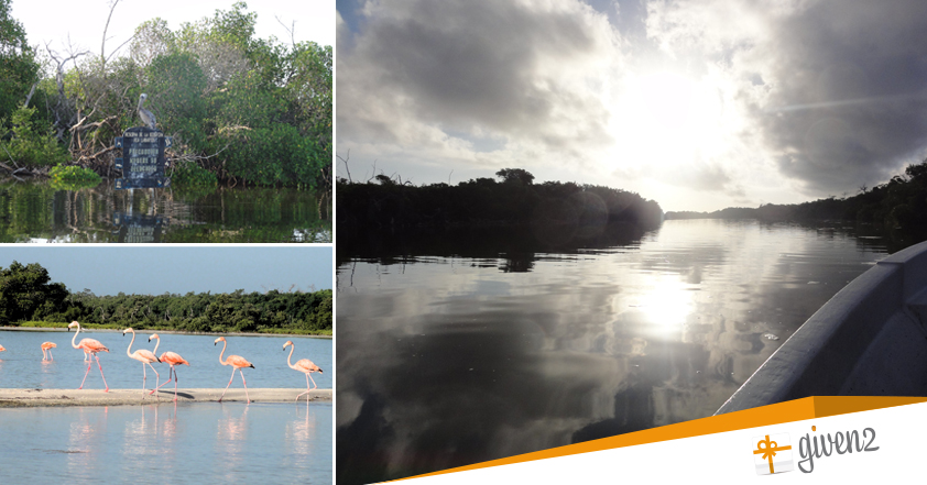 Cosa vedere in Messico: Rio Lagartos parco naturale