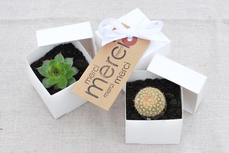 idee bomboniere matrimonio: piante grasse