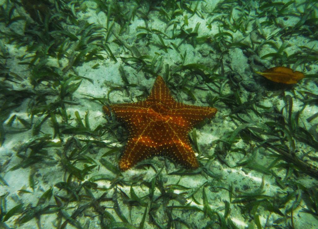 Viaggio di nozze Sud America | Stella marina alla Playa Estrella