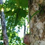 Costa Rica Honeymoon | Parque Nacional Manuel Antonio