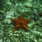 Costa Rica Honeymoon   Playa Estrella